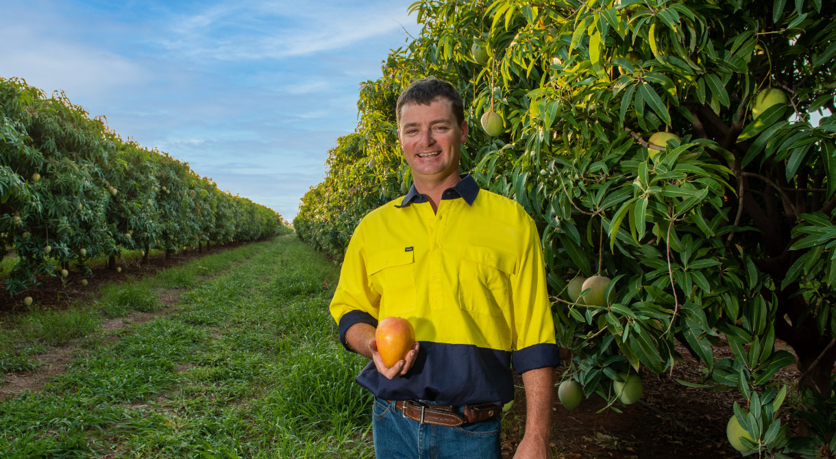 Katherine grower Nick Ormsby with a mango in the mango orchard