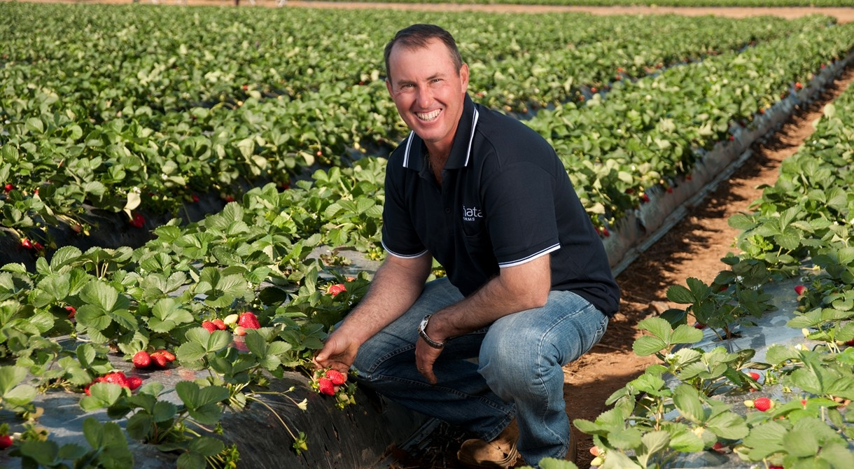 Wamuran strawberry manager Jason Dipple in a field of strawberries