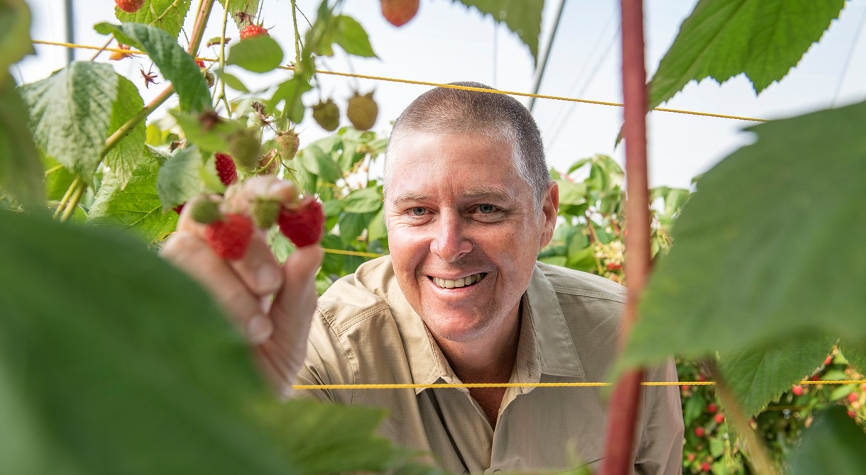 Gavin Scurr launches Tasmanian raspberries