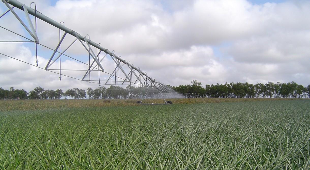 An irrigator in operation at Pinata Farms, Mareeba
