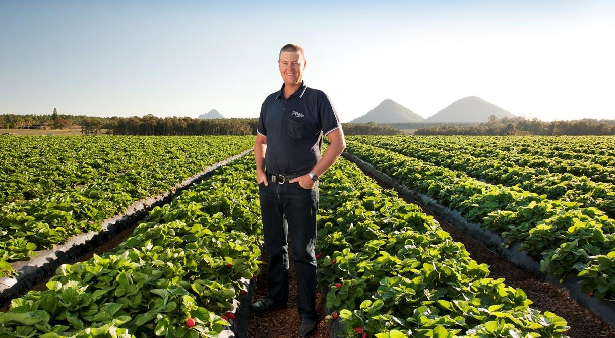 Managing director Gavin Scurr in a strawberry field at Wamuran