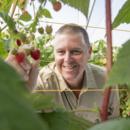 Managing director Gavin Scurr in the specialty raspberry crop at Wamuran, Queensland