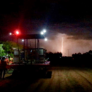 Picking Honey Gold mangoes at night during a storm, Katherine, Northern Territory