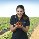 Key account manager Rebecca Scurr with a handful of strawberries, Wamuran
