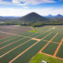An aerial view of pineapples growing at Pinata Farms, Wamuran