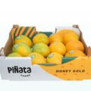 A tray of Honey Gold mangoes