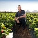 Managing director Gavin Scurr in a strawberry field, Wamuran