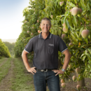 Managing director Gavin Scurr in a Honey Gold mango orchard at Pinata Farms.