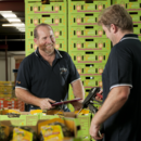 South Queensland operations manager Joe Schwarer at the Piñata Farms' packing shed, Wamuran, Queensland