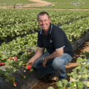 Wamuran strawberry farm manager Jason Dipple at Pinata Farms, Wamuran, Sunshine Coast, Queensland