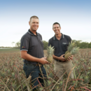 Managing director Gavin Scurr and North Queensland operations manager Stephen Scurr in a pineapple field, Wamuran