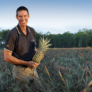 General manager tropicals Stephen Scurr in a pineapple field, Wamuran