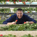 Managing director Gavin Scurr with specialty BerryWorld strawberries at Wamuran, Queensland