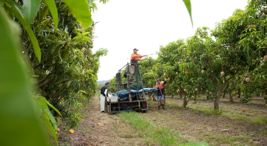 Harvesting underway in the Northern Territory