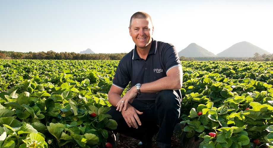 Managing director Gavin Scurr in a strawberry field at Wamuran
