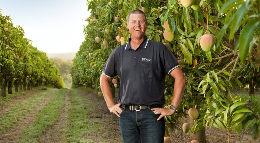 Managing director Gavin Scurr in the mango orchard at Wamuran