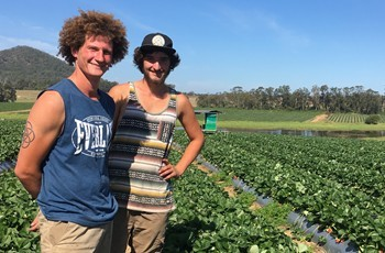 Strawberry pickers Maxim Bedouet and Martin Zenner