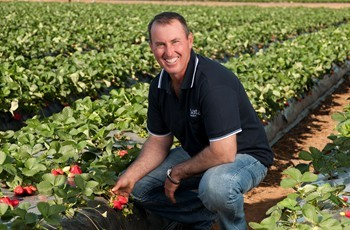 Pinata Farms' strawberry farm manager Jason Dipple
