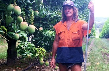 Pinata Farms mango picker Paul_Matthews