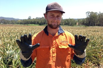 Pinata Farms' pineapple picker Zac Austin